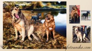 perro, perrito, perros, mascota, animal de compañia, perrihijo, peludo, cuadro, cuadro personalizado, lamina, oleo, oleografia, homenaje, recuerdo, regalo, unico, original, inolvidable, arte digital