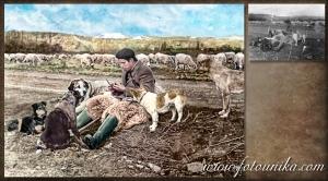 dibujo oleo de foto antigua restaurada pastor y perros para regalo