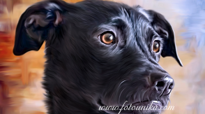 oleo, oleos, oleografia, oleografias, cuadro personalizado, cuadros personalizados, mascota, mascotas, animal de compañia, animales de compañia, perro, perrito, perros, perritos, perra, perrita, perritas