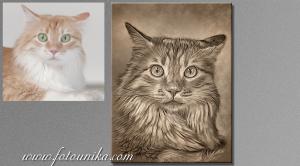 gato, gatito, mascota, cat, animal de compañia, carboncillo, carboncillo digital, cuadro, cuadro personalizado, lamina, homenaje, mascota, recuerdo, homenaje, regalo, regalo personalizado, el regalo, unico, original,