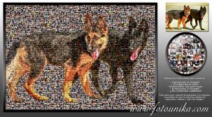 multifotos, mosaico, collage, cuadro, lamina, cuadro personalizado, miniaturas, regalo, homenaje, mascota, perro, original, unico, san anton, san francisco de asis