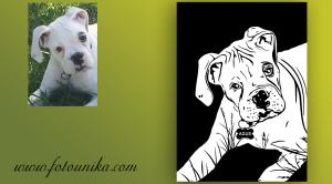 perro, dog, arte pop, pop art, arte digital, dibujo vectorial, vectorial, cuadro, cuadro personalizado, lamina, regalo, el regalo, homaneje, perrihijo, mascota