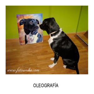 oleo, oleografia, cuadro, cuadro personalizado, lamina, arte digital, regalo, el regalo, original, perro, perrita, perrita, perra, perrihijo, perrihija, mascota, animal de compañia, dog