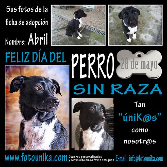 perro sin raza, sin raza, perro, dia del perro sin raza, homenaje, lamina, cuadro, cuadro personalizado, oleo, oleografia